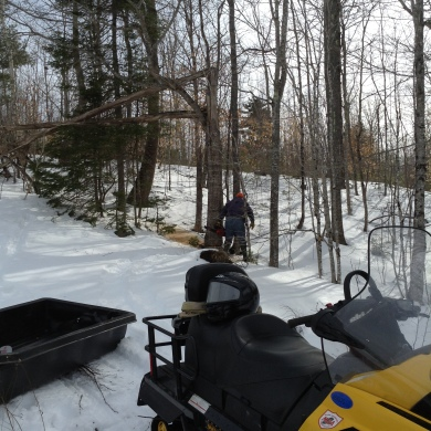 Cutting Firewood--Camden Maine